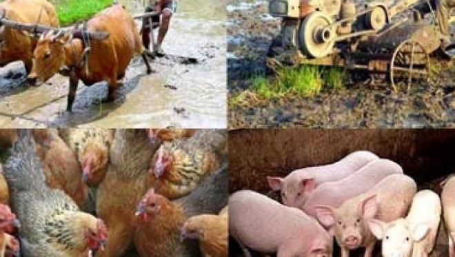 Người chăn nuôi gây ô nhiễm phải bồi thường thiệt hại? - Luật Trung Kiên