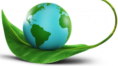 Phạt đến 30 triệu đồng cho việc xâm hại cây xanh - Luật Trung Kiên
