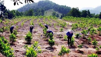 5 mức phạt mới về vi phạm đất đai từ 05/01/2020 - Luật Trung Kiên