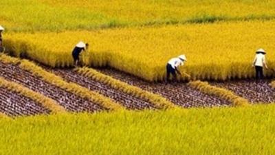 Sử dụng và đóng thuế đất phi nông nghiệp hàng năm nhưng không có tên trong sổ địa chính? - Luật Trung Kiên