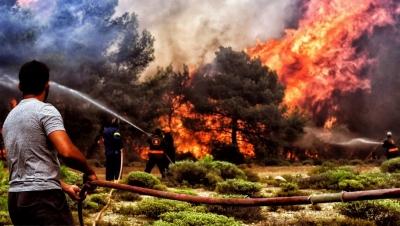 Phá rừng chặn lửa cháy rừng có phạm tội không? - Luật Trung Kiên