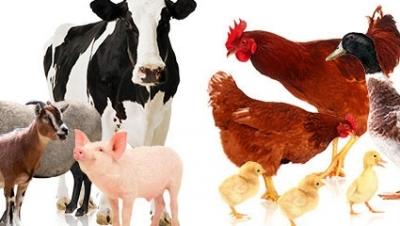 Xử phạt hành chính về vi phạm điều kiện kinh doanh thức ăn chăn nuôi - Luật Trung Kiên