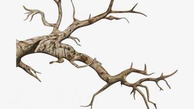 Ai phải chịu trách nhiệm bồi thường vụ cành cây rơi trúng người gây tử vong ở Hà Giang - Luật Trung Kiên
